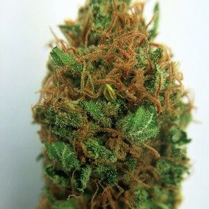 Sour Cheese